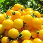 Tomate cherry amarillo